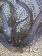 Fish Farming Made Easy | Livestock & Poultry for sale in Plateau State, Jos
