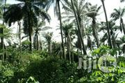 Fruitful 48 Acres Oil Palm P.Irrua Edo State,Sale/Lease   Commercial Property For Sale for sale in Edo State, Ekpoma