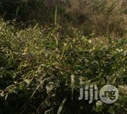 1000 Plot of Land for Sale in Awka North | Land & Plots For Sale for sale in Anambra State, Awka