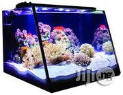 Magnificent Aquariums | Fish for sale in Abuja (FCT) State, Garki 1