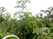 1.2 Acres of Farmland at Akanran | Land & Plots For Sale for sale in Oyo State, Lagelu