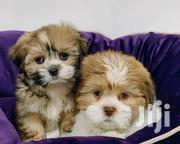 Adorable Fluffy Lhasa Apso   Dogs & Puppies for sale in Lagos State, Ikeja