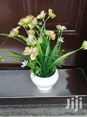 Beautiful Mini Potted Flowers For Sale | Garden for sale in Bauchi State, Gamawa