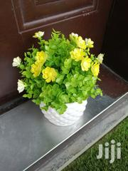 Get Affordable Beautiful Potted Flowers At Wholesale Prices Nationwide | Garden for sale in Ekiti State, Ilawe
