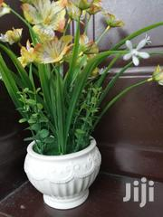 Beautiful Pot Flowers At Sales | Garden for sale in Gombe State, Akko