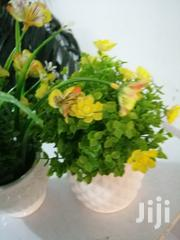Indoor Beautiful Cup Flowers For Decoration At Sales To Bulk Buyers | Garden for sale in Kano State, Garko