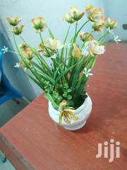 Cup Flowers For Sale At Low Cost | Garden for sale in Nasarawa State, Toto