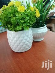 Portable Flowers On Cups For At Affordable Prices,Place Orders Now   Garden for sale in Borno State, Magumeri