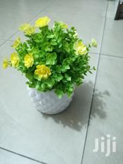 Cute Cup Flowers For Decorations Of Homes/Offices,Garden Etc | Garden for sale in Adamawa State, Fufore