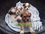 Lhasa Apso Puppies (Male Female)   Dogs & Puppies for sale in Lagos State, Magodo