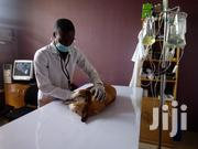 Vetcribs Veterinary Services | Pet Services for sale in Abuja (FCT) State, Utako