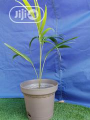 Suppliers Of Big Flowers Pots | Garden for sale in Adamawa State, Fufore