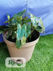 Flower Pot-the Home Depot | Garden for sale in Bauchi State, Darazo