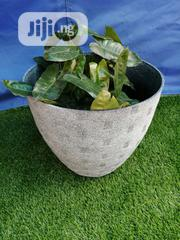 Affordable Black Flower Planters For Sale   Garden for sale in Ebonyi State, Ikwo