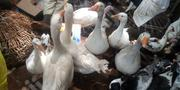Goose And Duck Turkey   Livestock & Poultry for sale in Lagos State, Ikeja