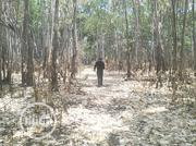 500 Plots for Sale in Oguta 2 | Land & Plots For Sale for sale in Imo State, Ohaji/Egbema