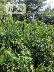 A Plot Of Land For Residential Porpose | Land & Plots For Sale for sale in Ogun State, Ijebu Ode