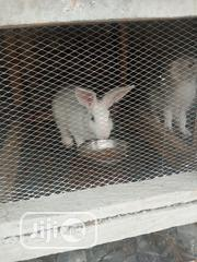 Foreign Rabbit | Livestock & Poultry for sale in Cross River State, Calabar