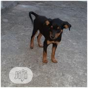 Baby Female Purebred Rottweiler | Dogs & Puppies for sale in Lagos State, Yaba