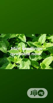 Order For Your Mint Seedlings Now | Feeds, Supplements & Seeds for sale in Ogun State, Ado-Odo/Ota