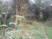 Farmland for Sale | Land & Plots For Sale for sale in Cross River State, Biase