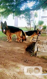 Home Service Veterinary Care For Dogs | Pet Services for sale in Abuja (FCT) State, Kubwa