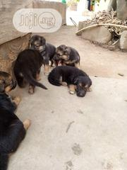 Baby Female Purebred German Shepherd Dog | Dogs & Puppies for sale in Lagos State, Amuwo-Odofin