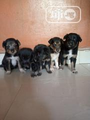 Baby Female Purebred German Shepherd Dog | Dogs & Puppies for sale in Anambra State, Onitsha