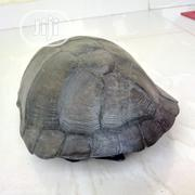African Tortoise   Reptiles for sale in Lagos State, Ojo