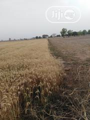 Rice Farm Land For Sale | Commercial Property For Sale for sale in Kano State, Kura