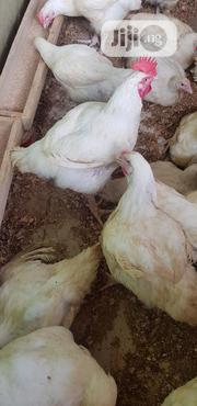 Organically Grown Live Chicken At Affordable Prices For Sale | Livestock & Poultry for sale in Lagos State, Ojodu