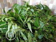 Dongoyaro Leaf 4 Various Use   Vitamins & Supplements for sale in Lagos State, Ajah