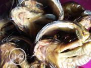 Dolab Catfish Fish | Meals & Drinks for sale in Lagos State, Ipaja