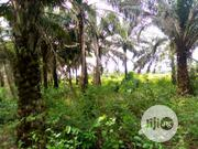 13plots of Palm Plantation for Sale | Land & Plots For Sale for sale in Imo State, Ngor-Okpala