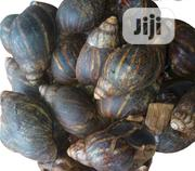 Packaged Snail | Livestock & Poultry for sale in Lagos State, Ikorodu