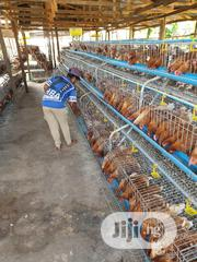 Poultry Workers Needed In Lagos | Farming & Veterinary Jobs for sale in Plateau State, Pankshin