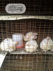 Mature Broilers Chicken | Livestock & Poultry for sale in Abuja (FCT) State, Garki 2