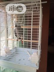 Parrot Cage | Pet's Accessories for sale in Lagos State, Oshodi-Isolo