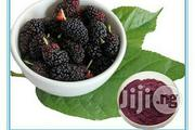 Mulberry Extract 25g   Skin Care for sale in Lagos State, Ojodu